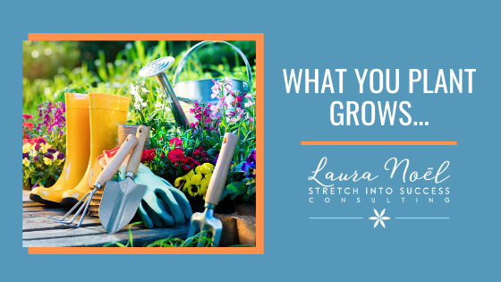 What you plant grows…